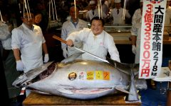 Bluefin tuna sells for record $3.1 million at Tokyo fish market, but scarcity clouds celebration
